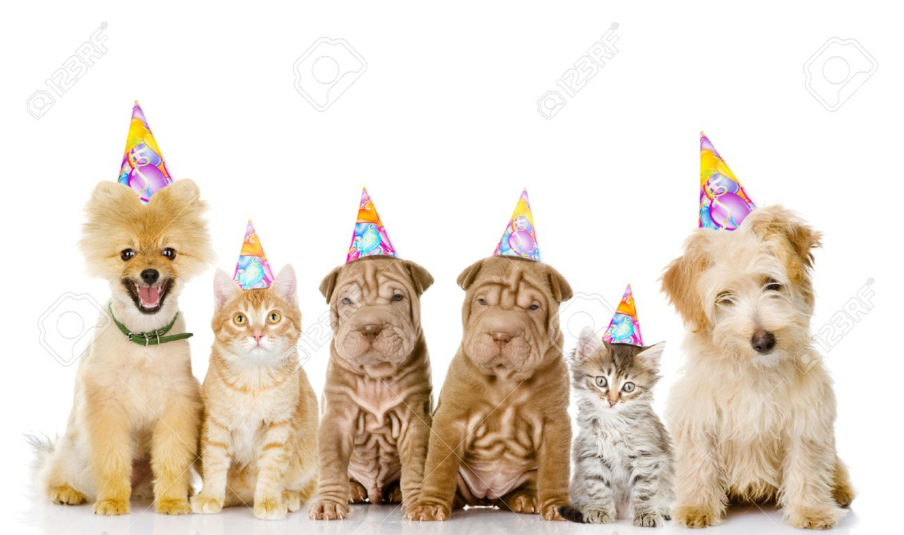 Group Of Cats And Dogs With Birthday Hats Isolated On White Stock