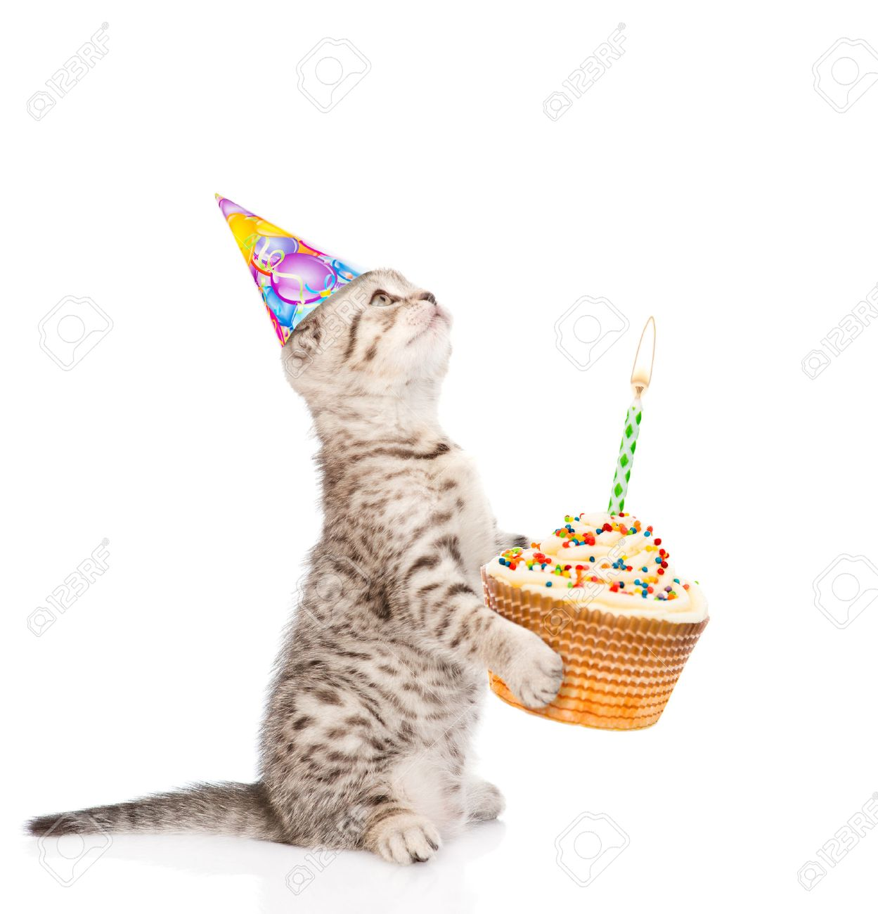 Tabby Cat In Birthday Hat Holding Cake With Candles Isolated