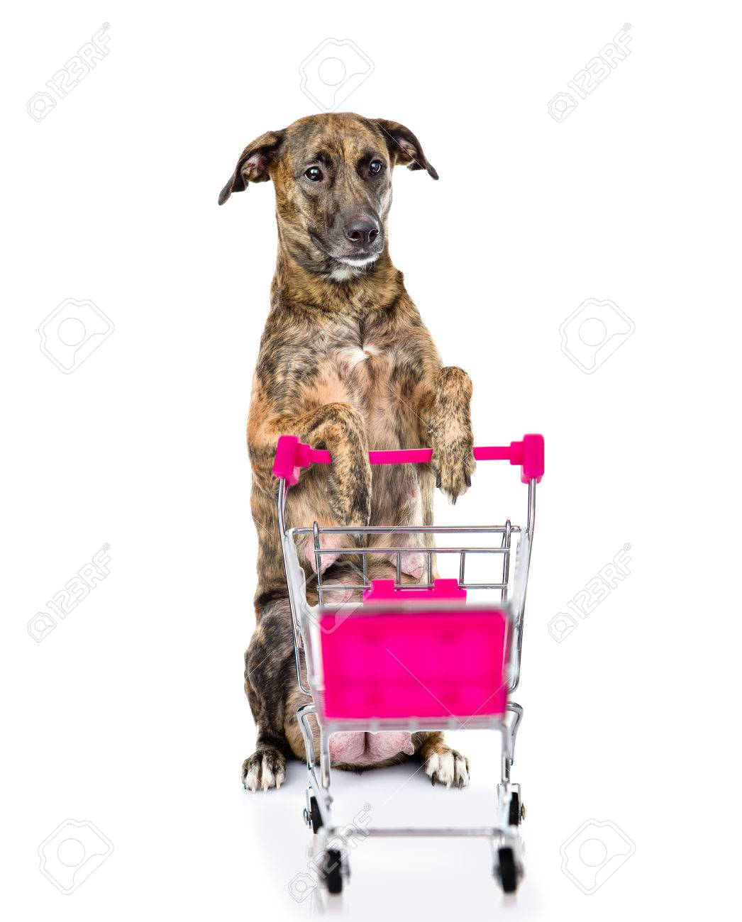 Big dog with shopping trolley  isolated on white background