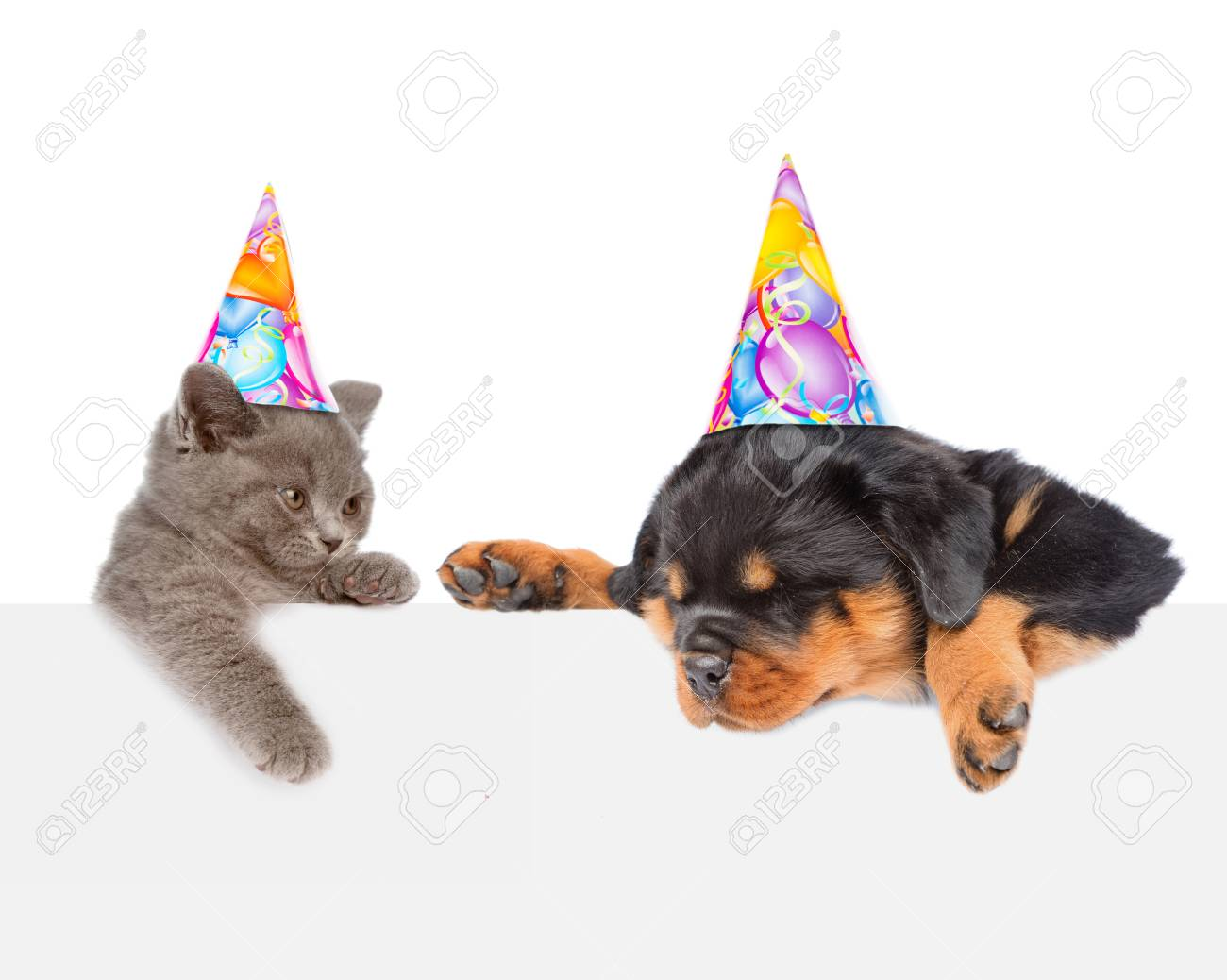 Cat And Dog In Birthday Hats Peeking From Behind Empty Board Looking Down Isolated On