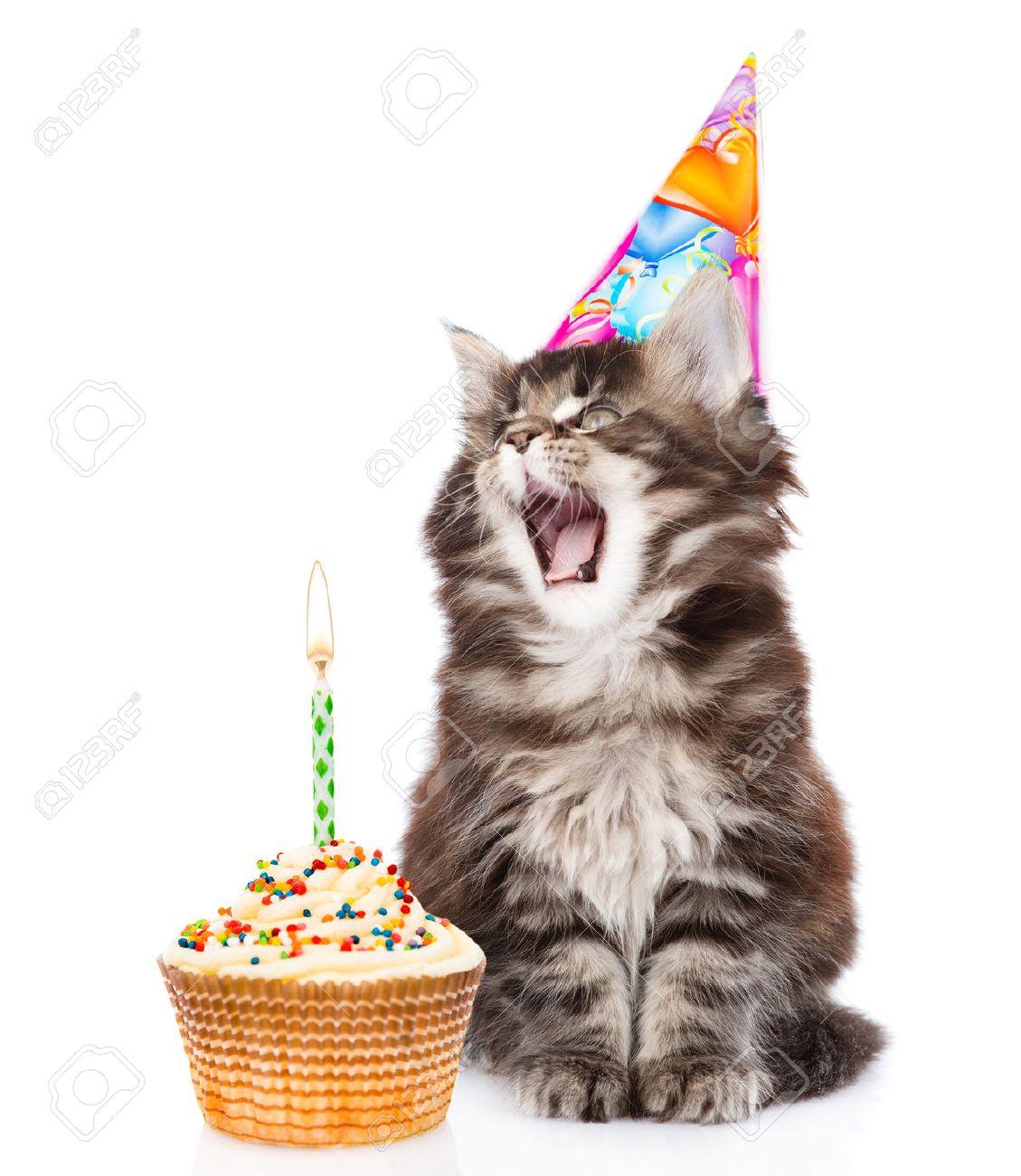 Kat In Verjaardag Hoed Blaast De Kaarsjes Op De Taart Geïsoleerd Op