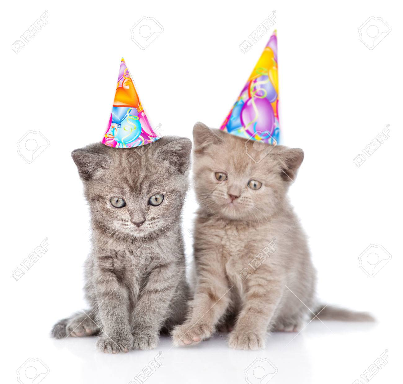 Two Funny Kittens With Birthday Hats Isolated On White Background