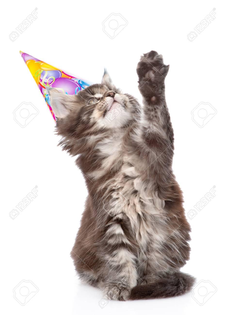 Vaak Speelse Kat Met Een Verjaardag Hoed Op Te Zoeken. Geïsoleerd Op &OA11