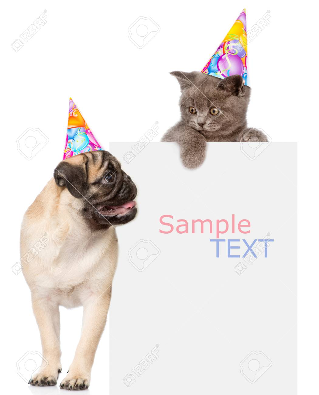 Pug Puppy And Small Kitten In Birthday Hats Above White Banner Space For Text