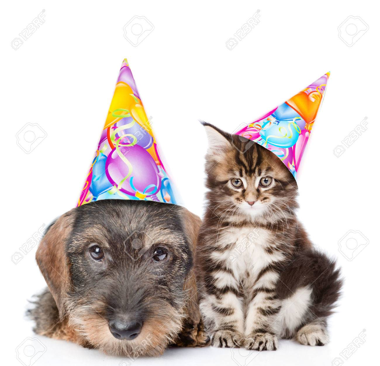 Cat And Dog In Birthday Hats Looking At Camera Together Isolated On White Background