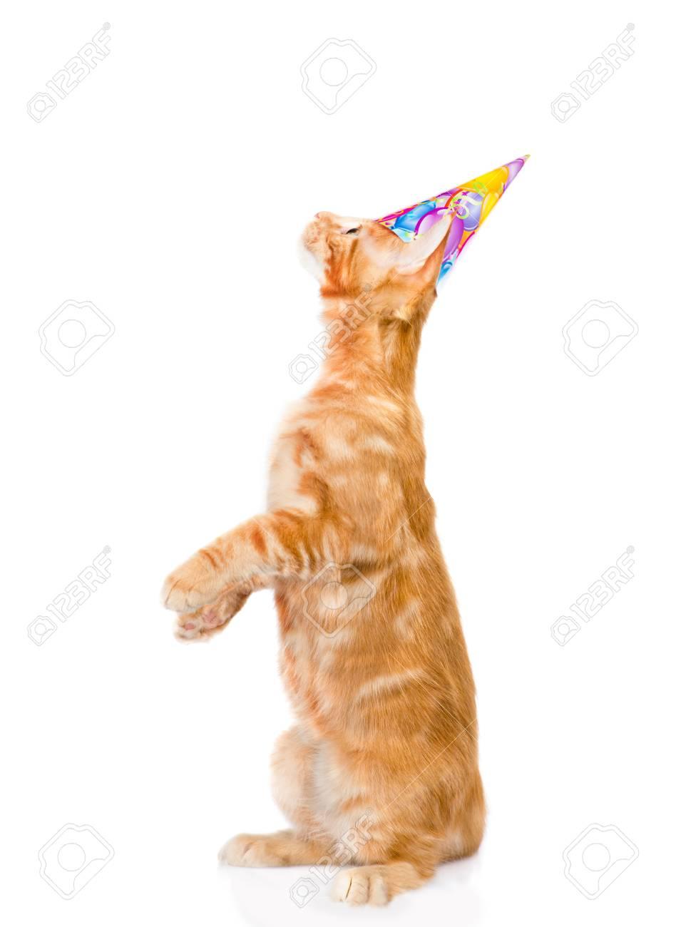 Speelse Kat Met Verjaardag Hoed Opzoeken Geïsoleerd Op Witte