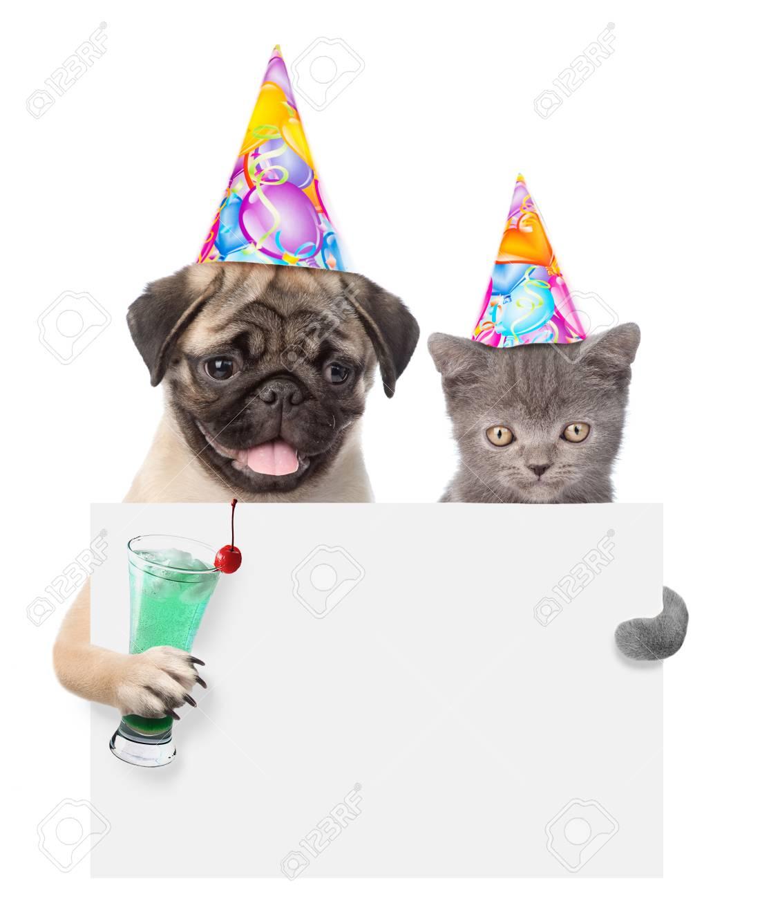 Kat En Hond In Verjaardag Hoeden Bedrijf Cocktail Gluren Van Achter