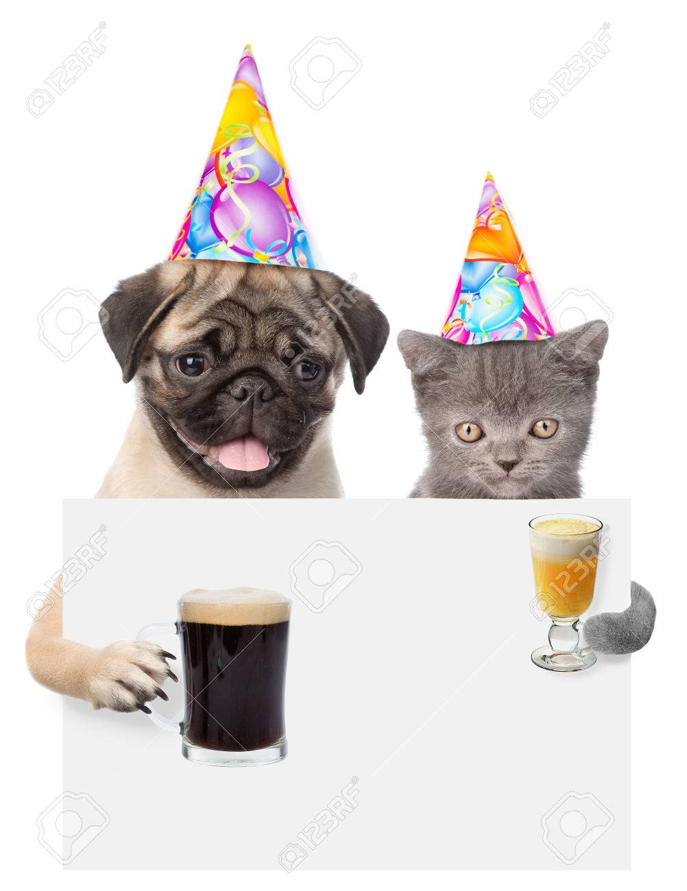 Cat And Dog In Birthday Hats Holding Beer Cocktail Peeking From Behind Empty Board