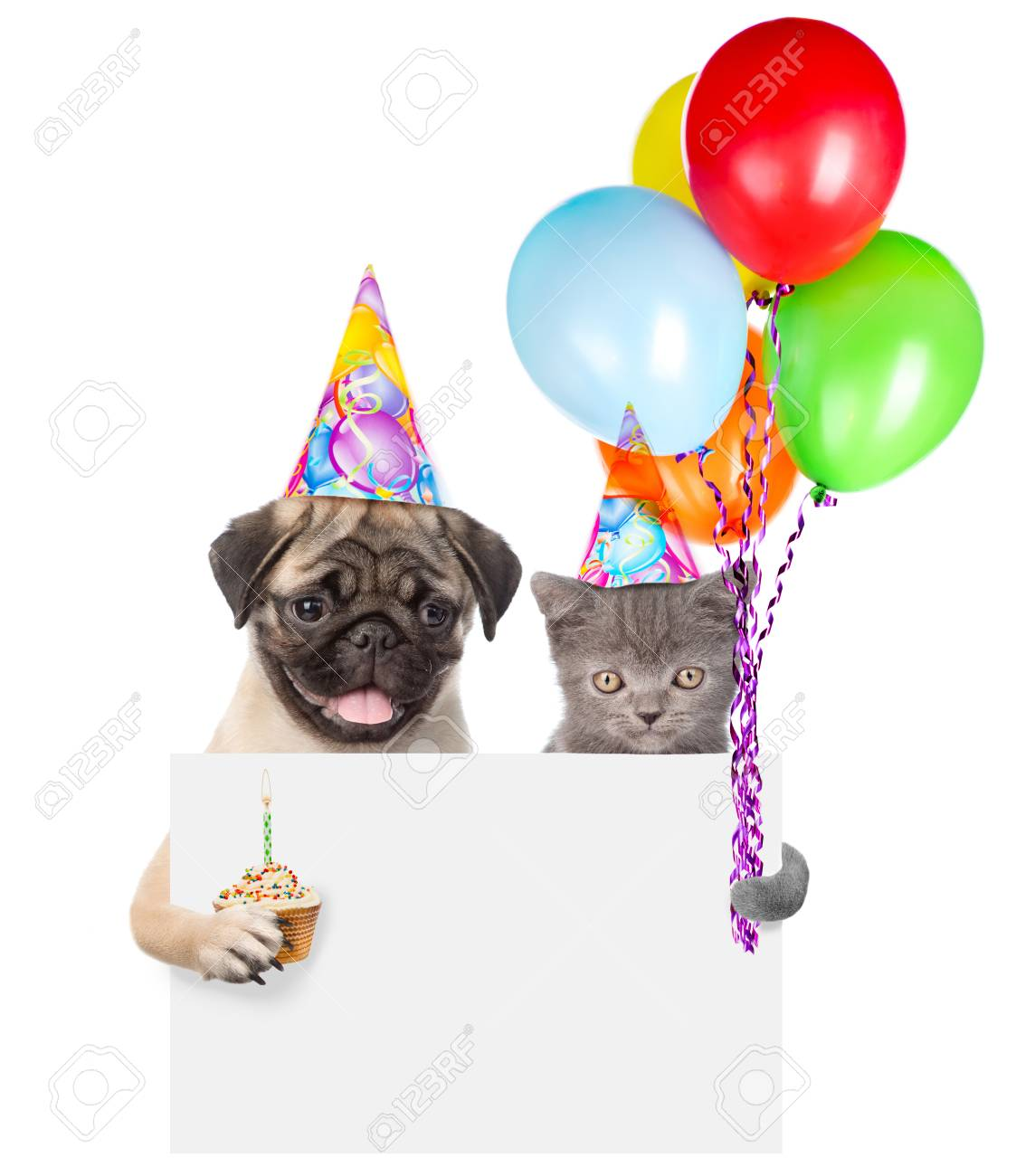 Cat And Dog In Birthday Hats Holding Cake Balloons Peeking From Behind Empty Board