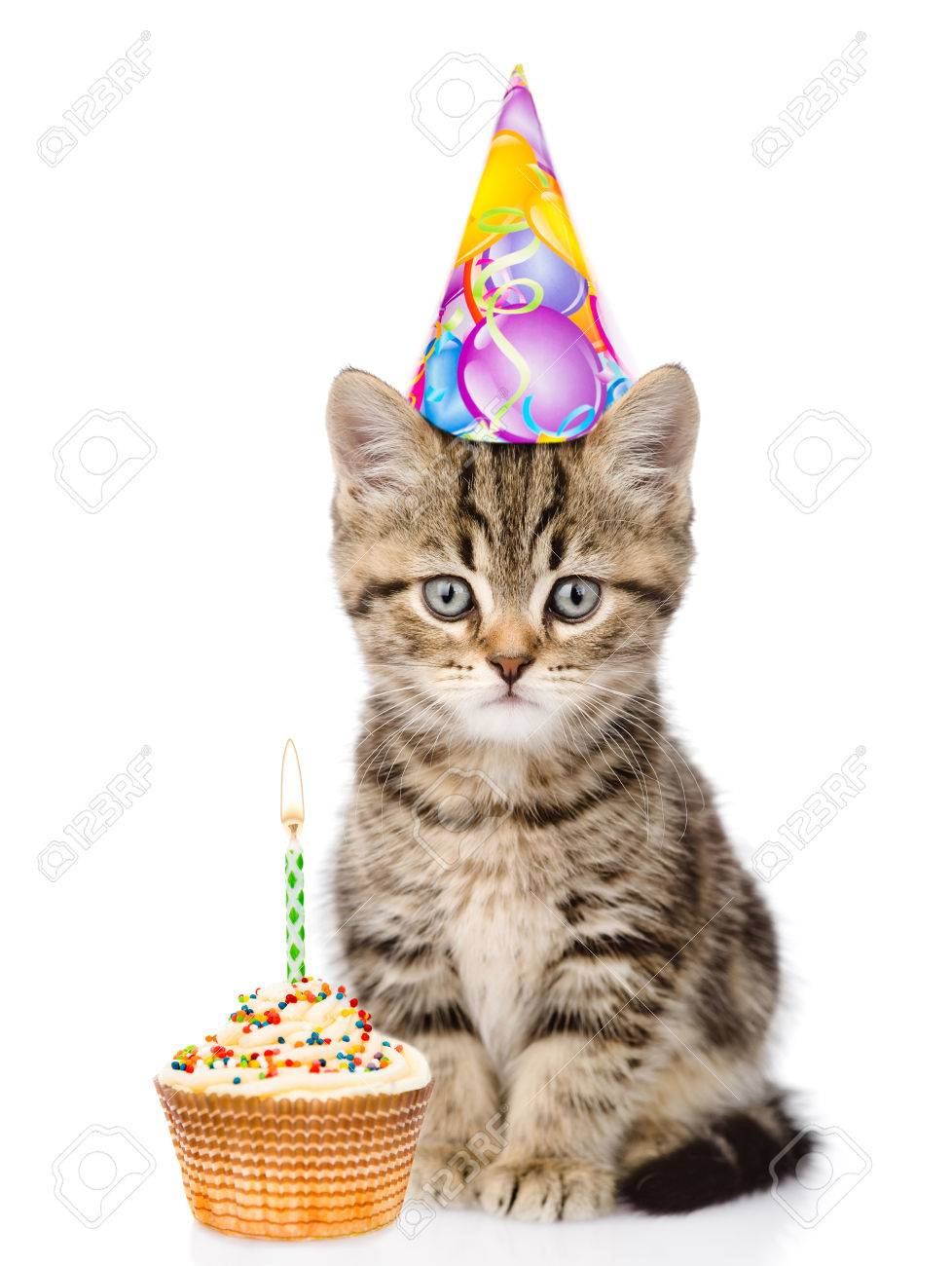 Cat In Birthday Hat And Cake Looking At Camera Isolated On White Background Stock