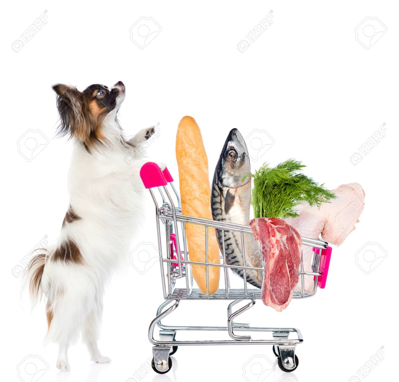 Dog with shopping trolley full of food  isolated on white background