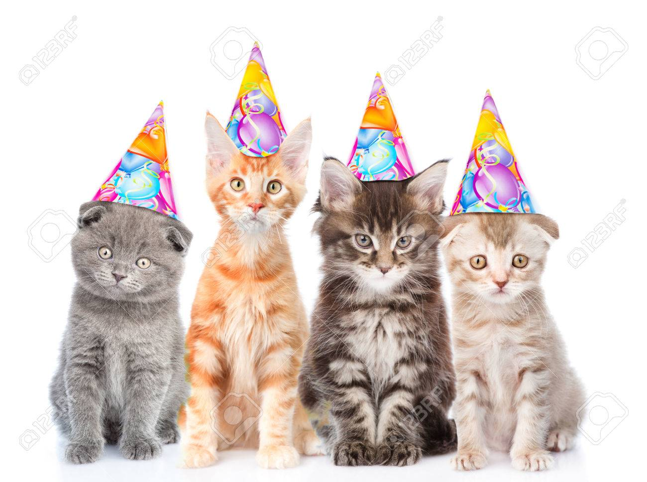 Large Group Of Small Cats With Birthday Hats Isolated On White Background Stock Photo