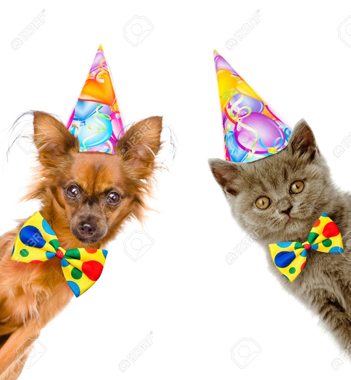 Cat And Dog In Birthday Hats With Bow Tie Look Out From Behind A Banner