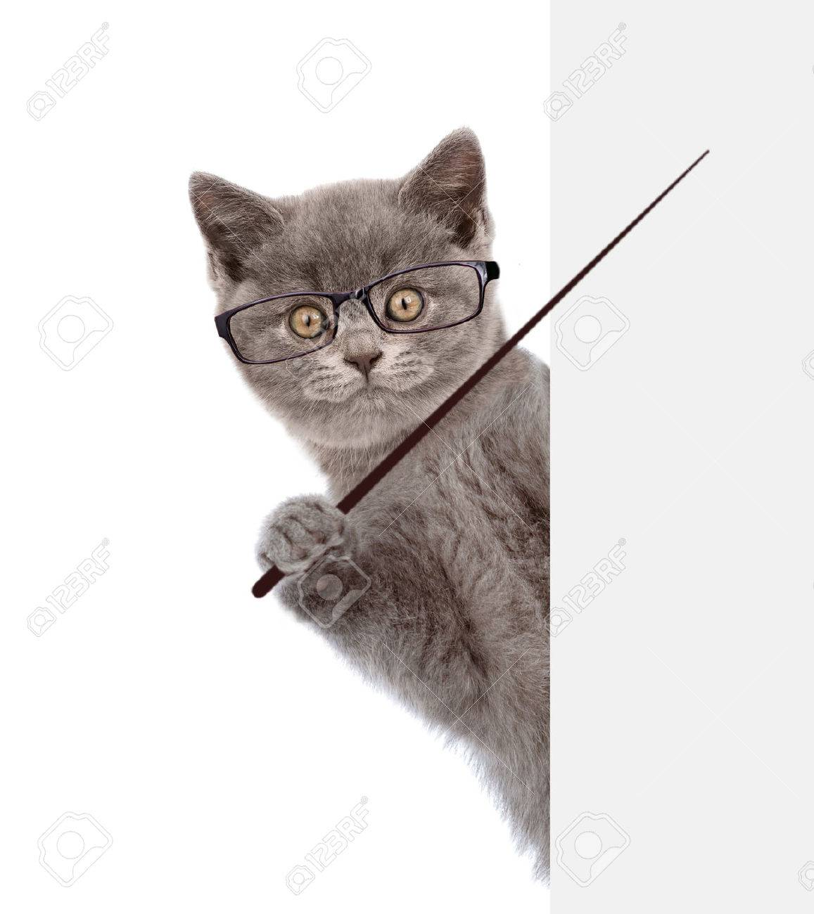 Cat wearing glasses holding a pointing stick and points on empty banner. isolated on white background. - 58749167
