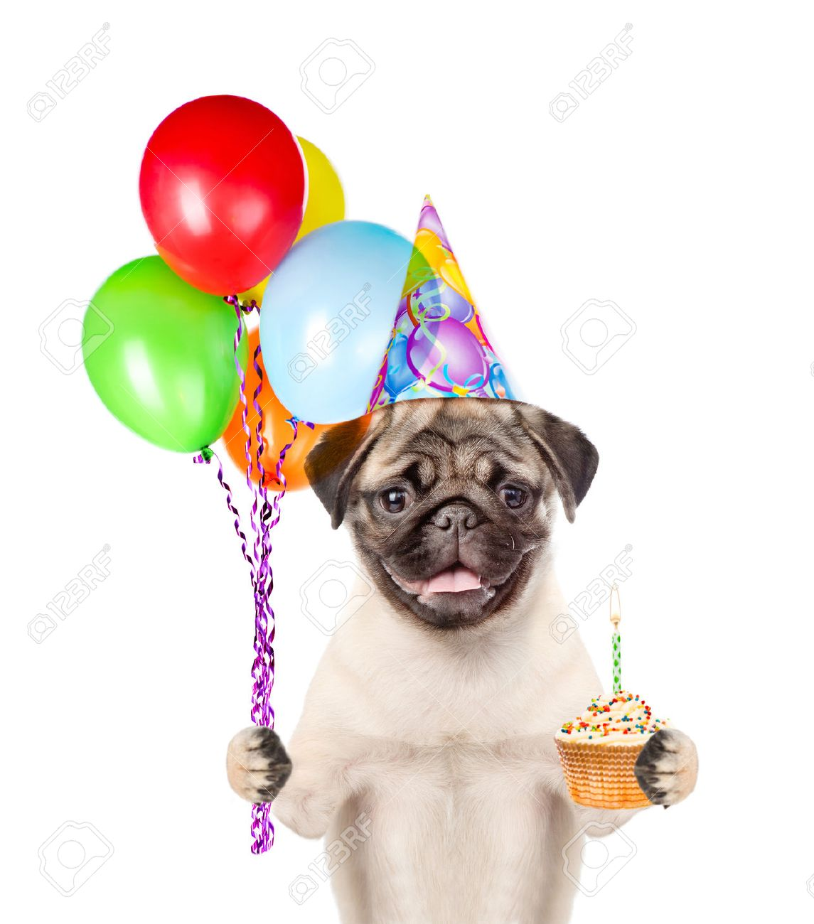 Dog In Birthday Hat Holding Balloons And Cake Isolated On White Background Stock Photo