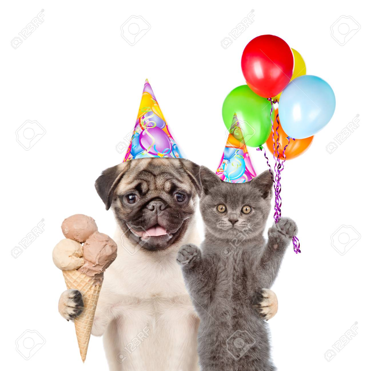 Cat And Dog In Birthday Hats Holding Balloons Ice Cream Isolated On White Background