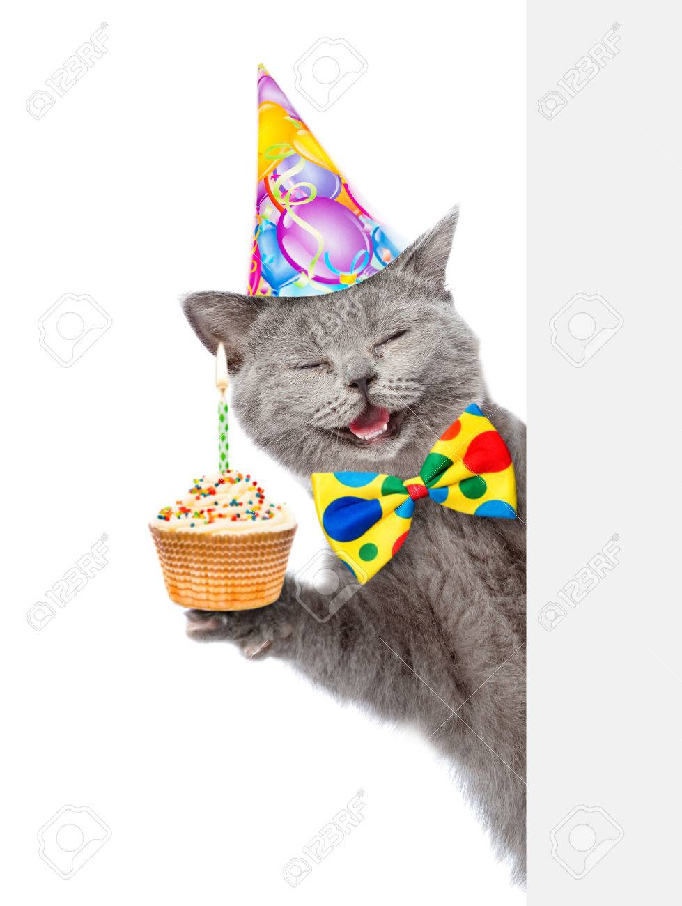 Happy Cat In Birthday Hat With Cupcake Holding A Pointing Stick And Points On Empty Banner