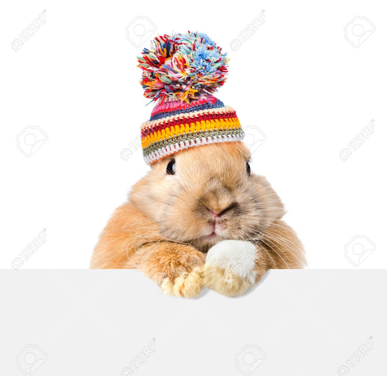 Rabbit wearing a warm hat looking over a signboard. Isolated on white background. - 61947476