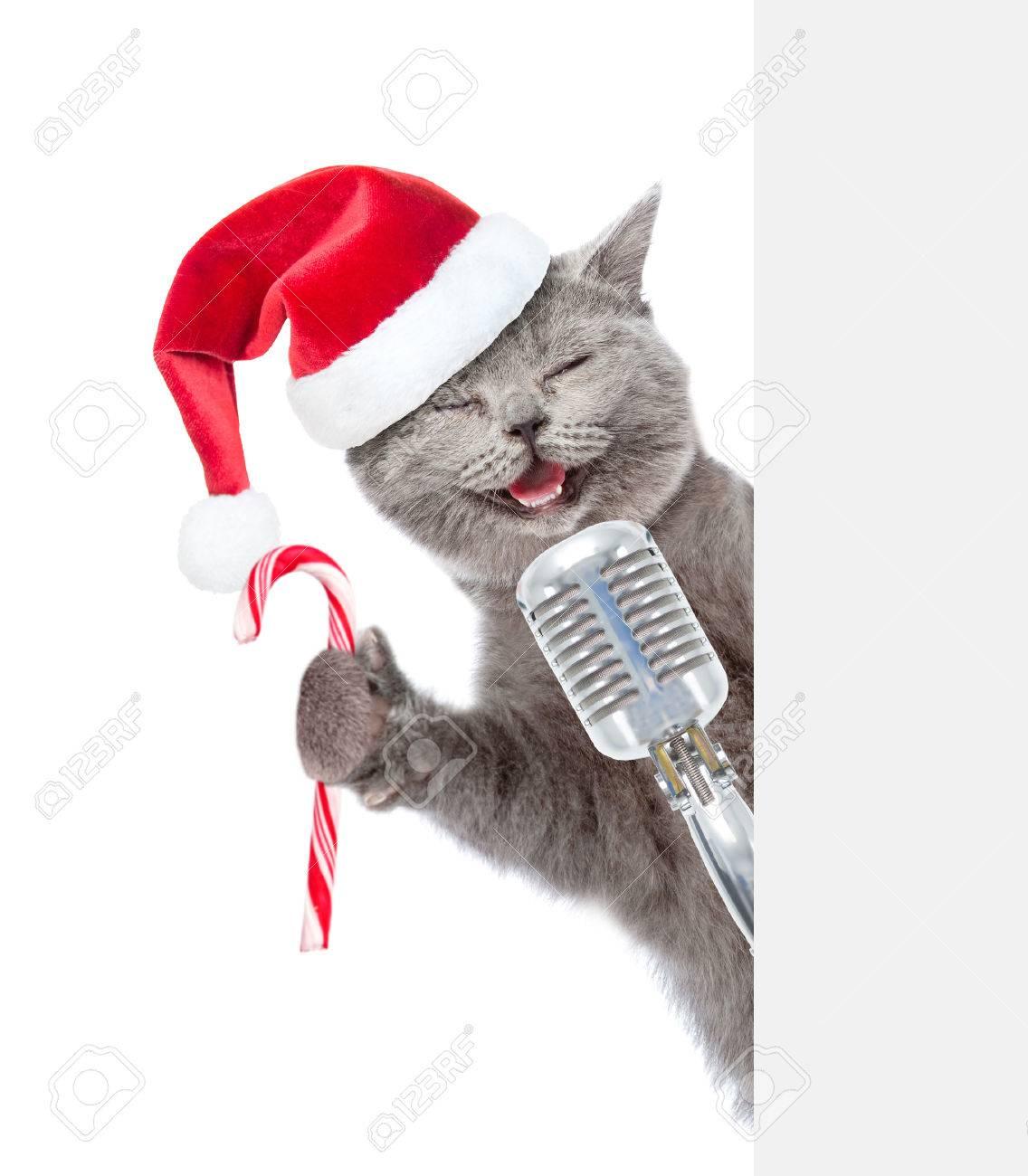 Immagini Stock Gatto Con Il Retro Microfono In Cappello Rosso Di