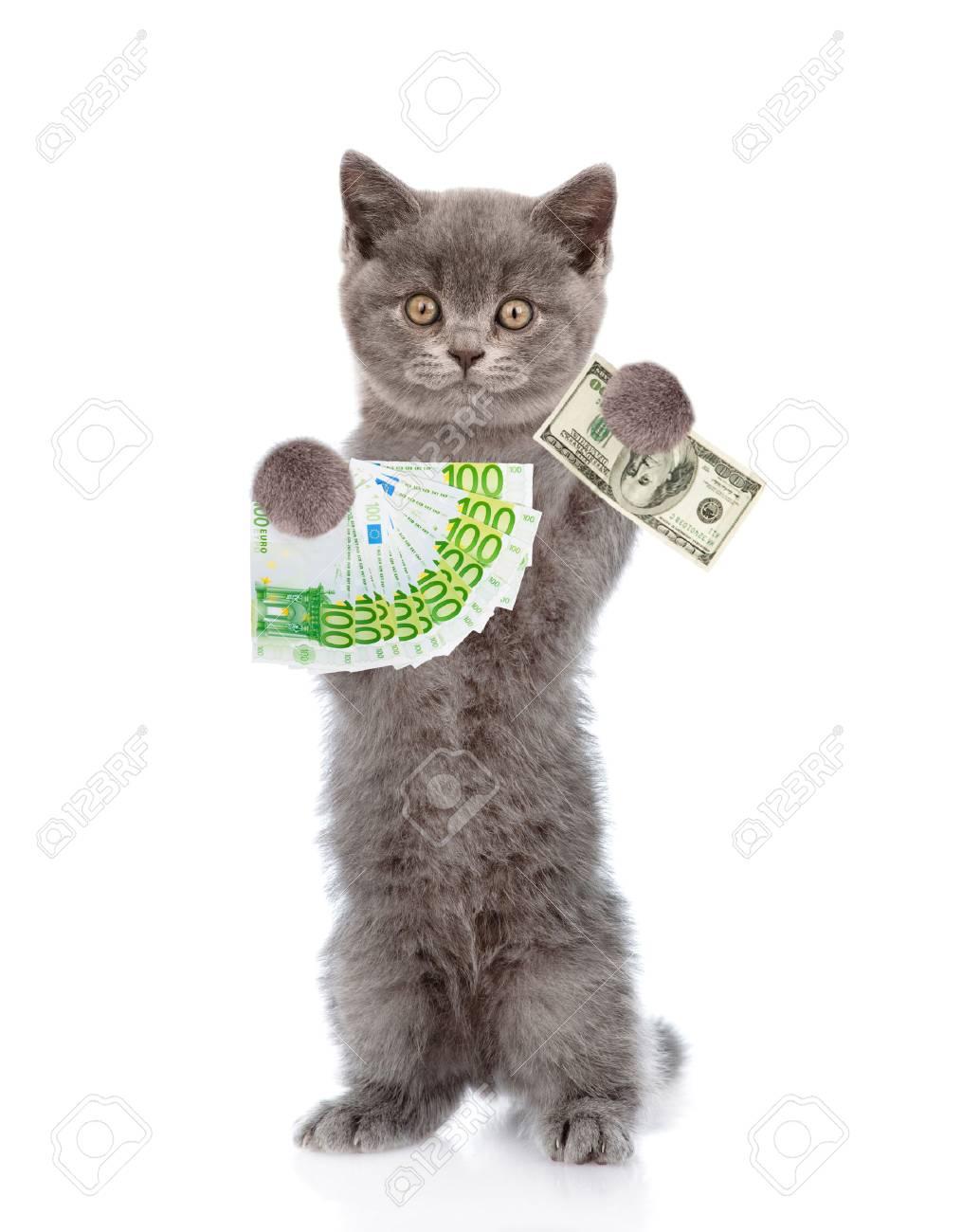 """Résultat de recherche d'images pour """"chat argent"""""""