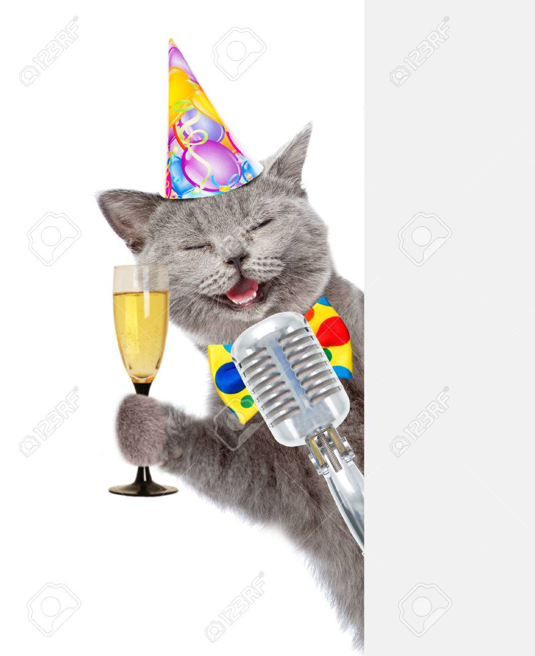 Kat In Verjaardag Hoed Houdt Retro Microfoon En Een Glas Champagne
