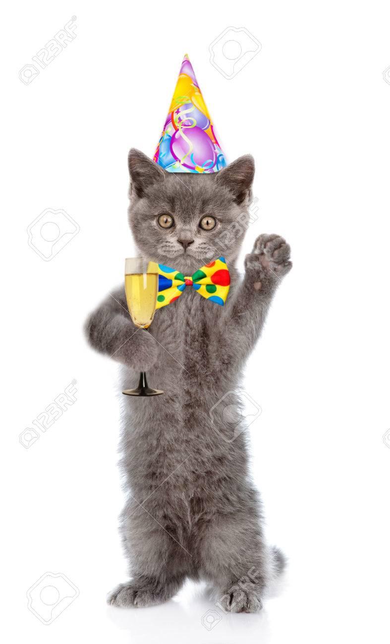 Gelukkig Kat In Verjaardag Hoed Met Een Glas Champagne Geïsoleerd