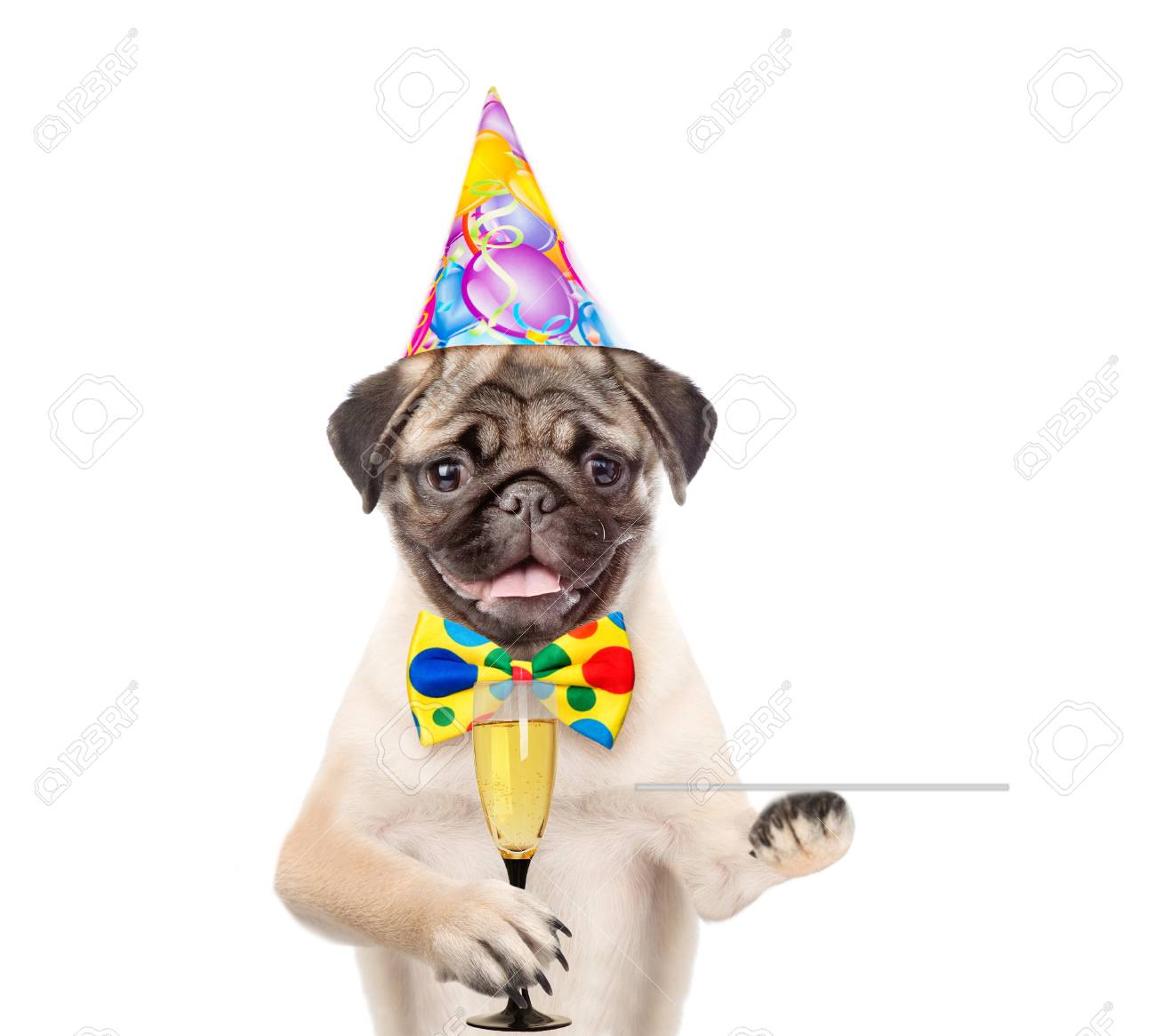 Dog In Birthday Hat Holding Glass Of Champagne And Service Tray Isolated On White Background