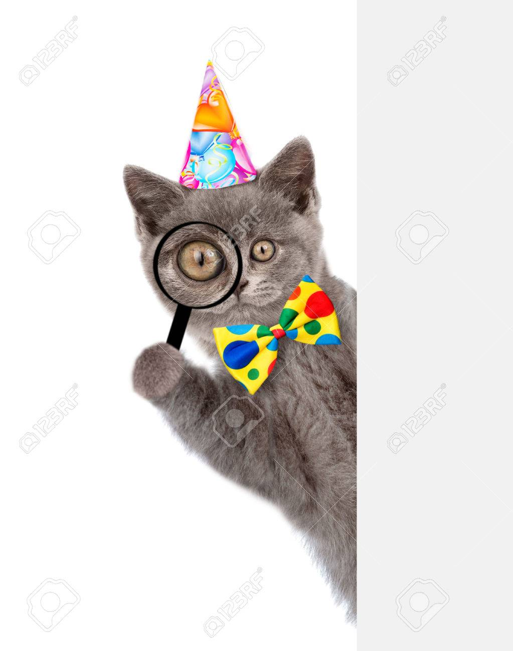 49f202da Funny cat in birthday hat looks thru a magnifying lens. Isolated on white  background.