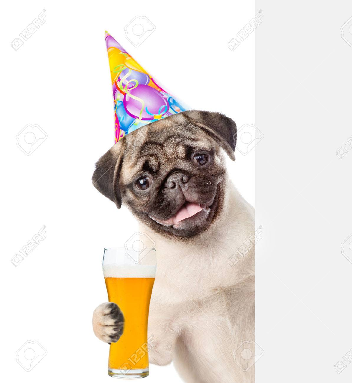 Happy Dog In Birthday Hat Lwith Light Beer Peeking Above White Banner Isolated On