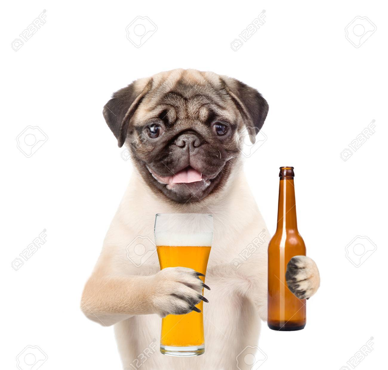 Fabulous Grappige Puppy Met Een Glas Bier En Fles. Geïsoleerd Op Een Witte &PL02