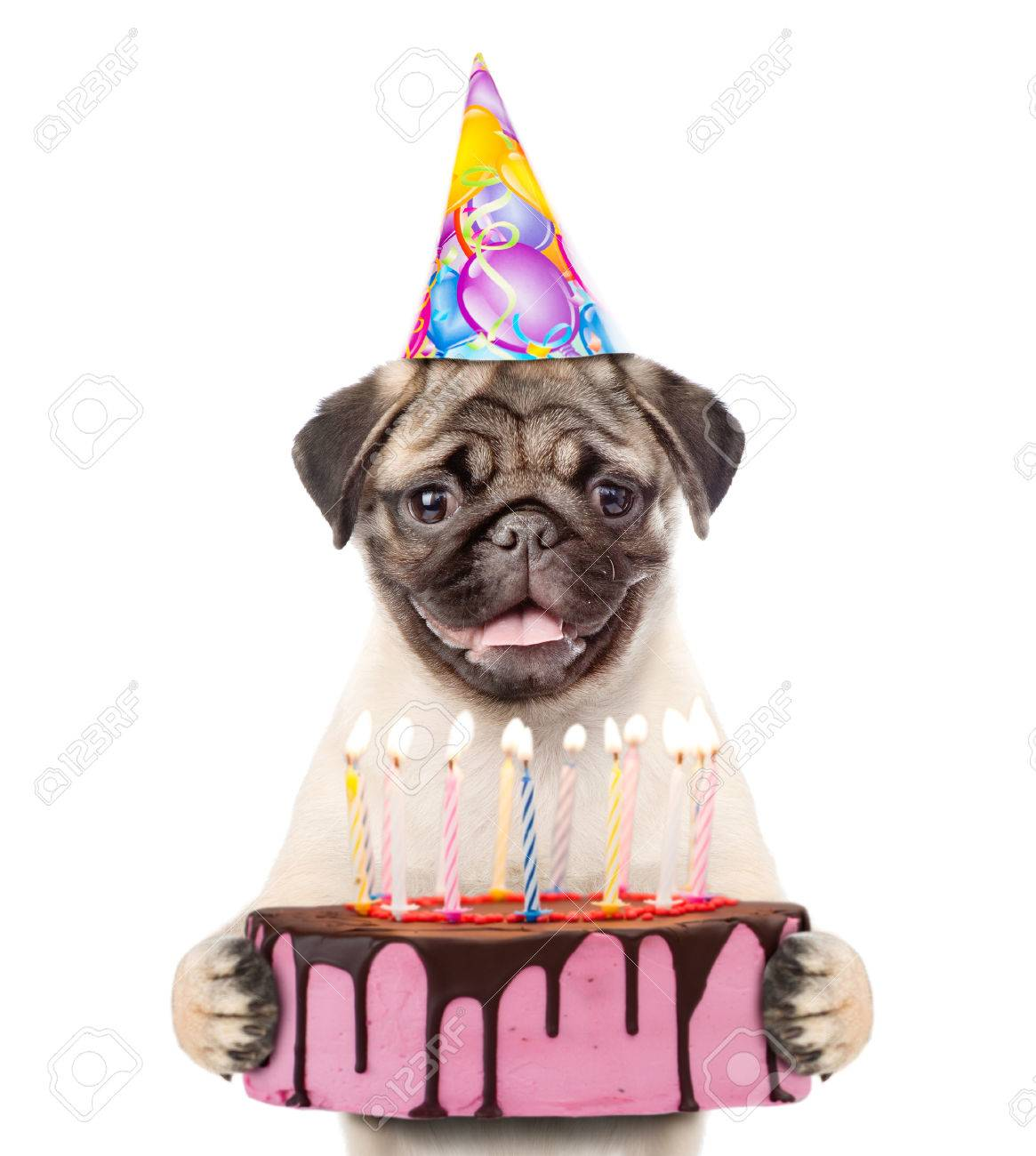 Funny Puppy In Party Hat Holding Birthday Cake With Many Burning Candles Isolated On White