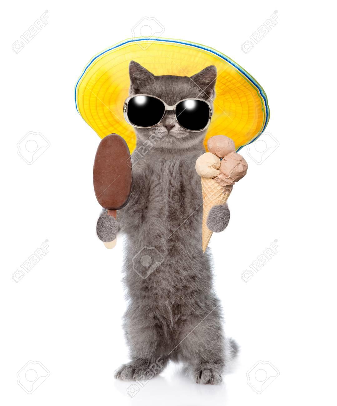 Chat d'été drôle avec des lunettes de soleil et chapeau manger des glaces. isolé sur fond blanc. Banque d'images - 82253801