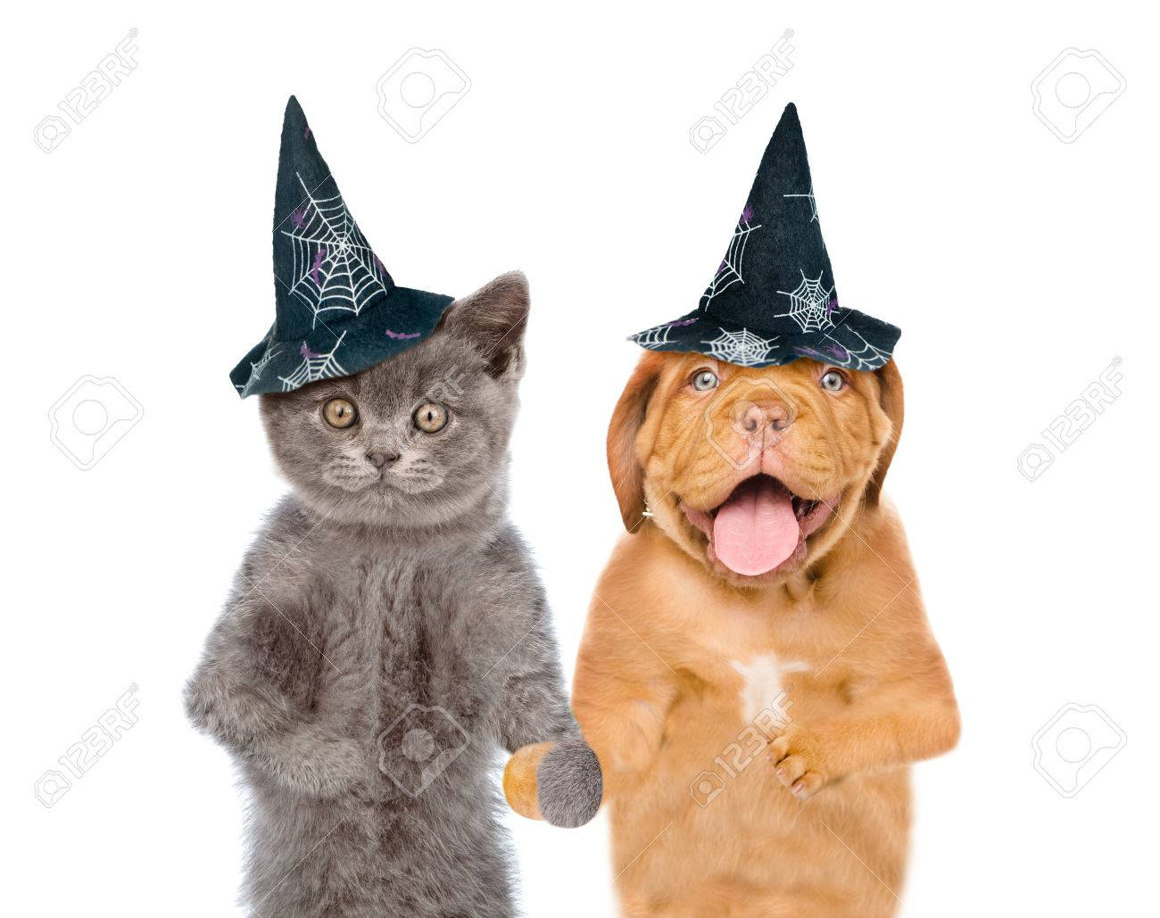 funny kitten and puppy in hats for halloween isolated on white background stock photo