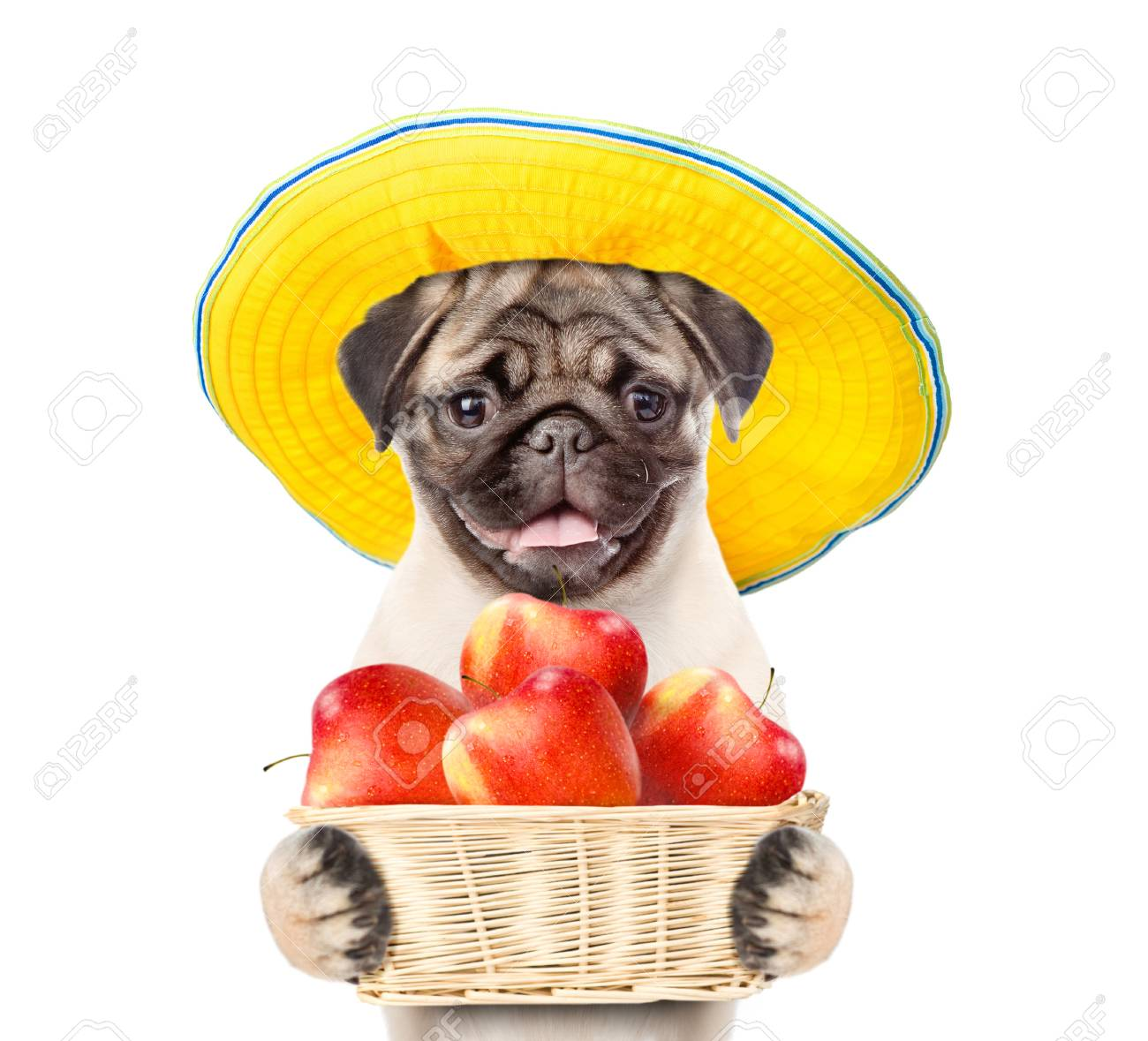 Funny Puppy In Summer Hat Holding A Basket Of Apples Isolated