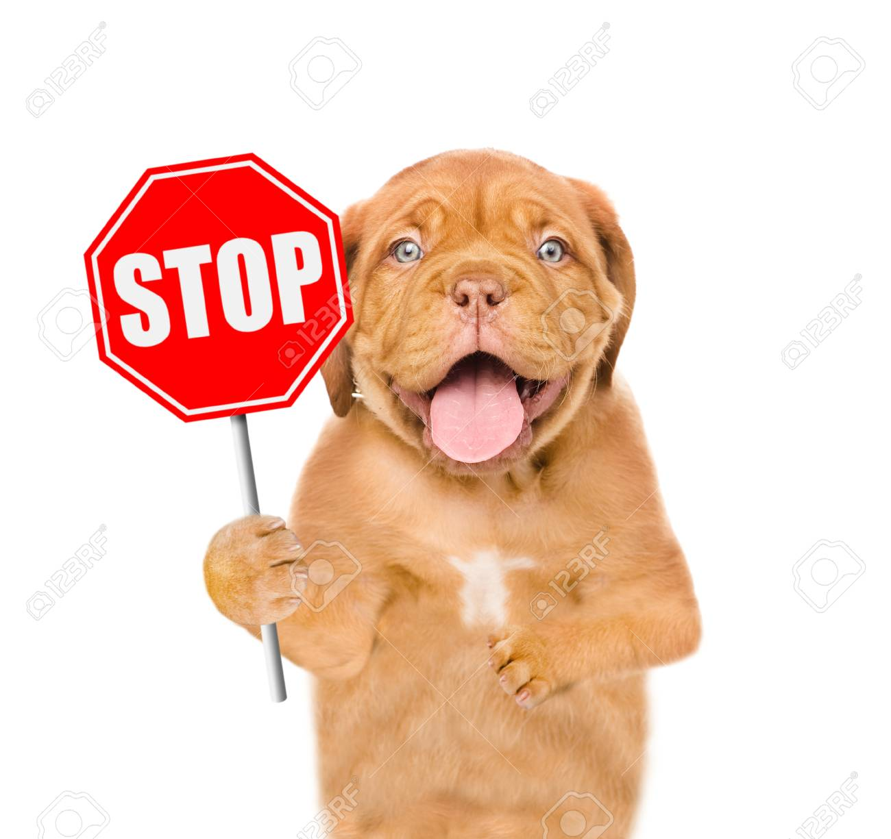 Stop that Dog