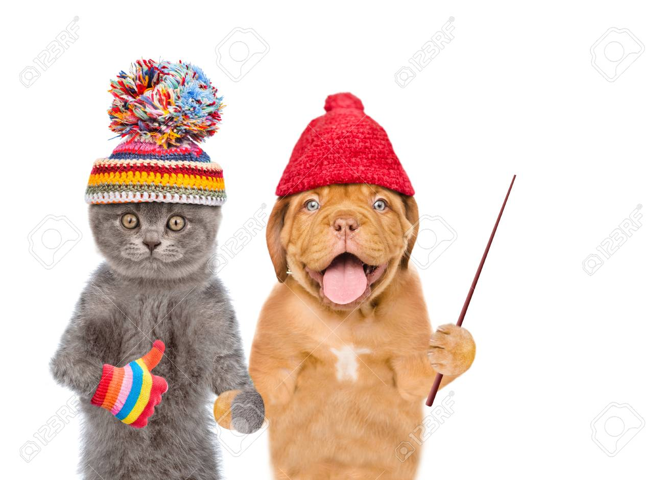 7d3e067930283 Funny kitten and puppy in winter hats holds pointing stick. isolated on  white background.