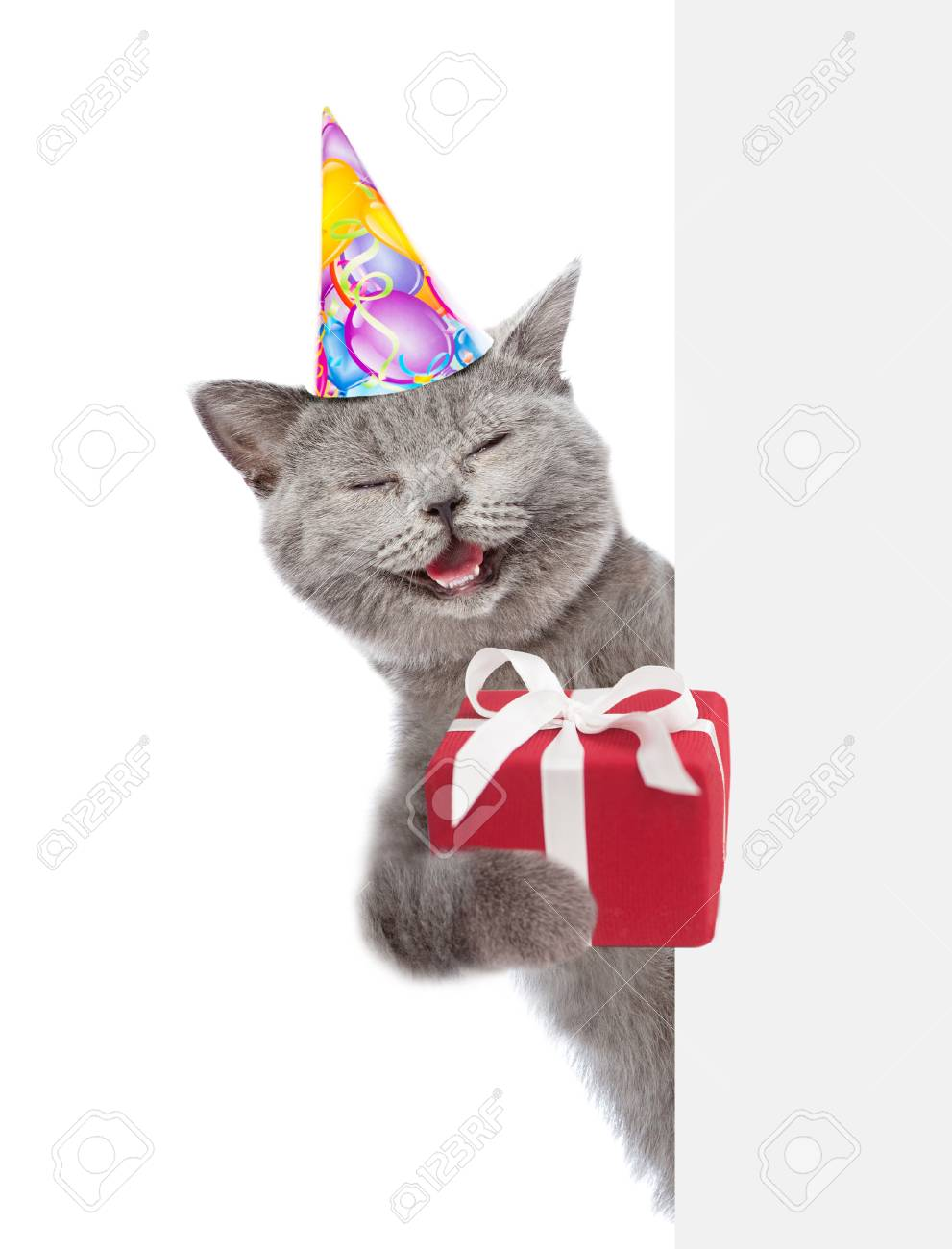 Happy Cat In Party Hat Holding Gift Box And Peeking Above White.. Stock  Photo, Picture And Royalty Free Image. Image 89134712.