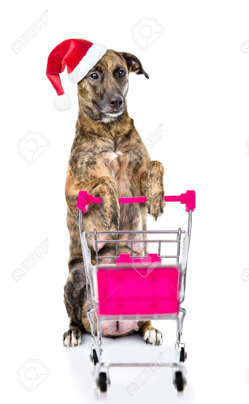 Big dog in red christmas hat with shopping trolley  isolated