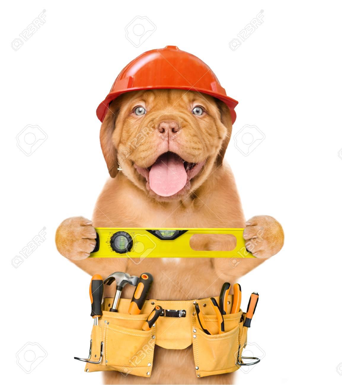 dog hard hat