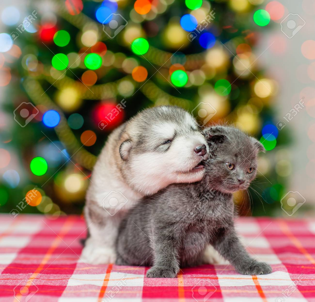 Kitten Christmas.Puppy Kisses The Kitten On A Background Of The Christmas Tree