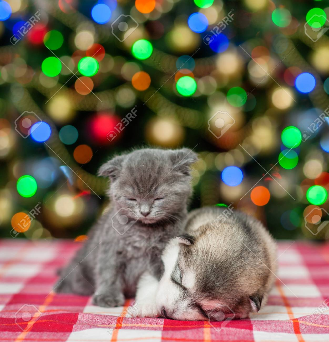 Kitten Christmas.Sleeping Puppy And Kitten On A Background Of The Christmas Tree