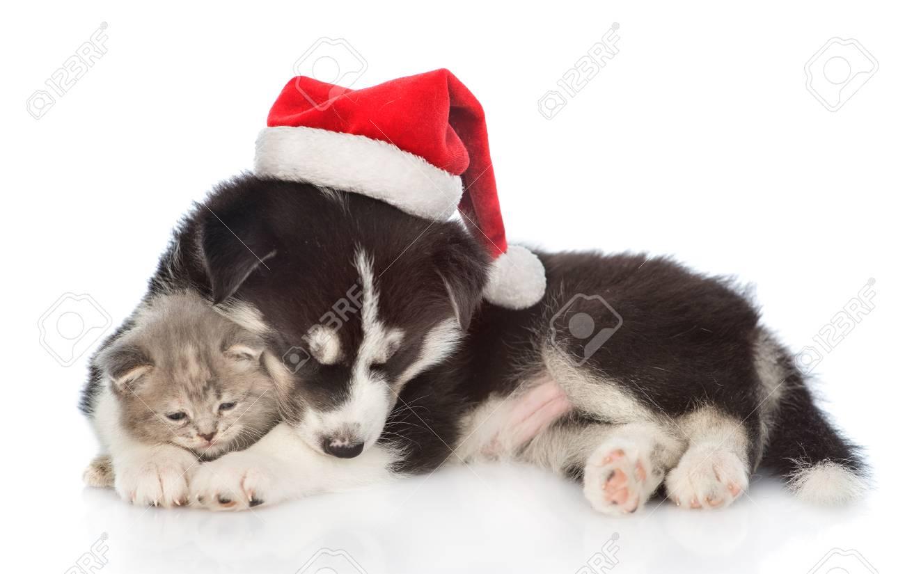 Sleepy Siberian Husky Puppy In Red Santa Hat Hugging A Kitten