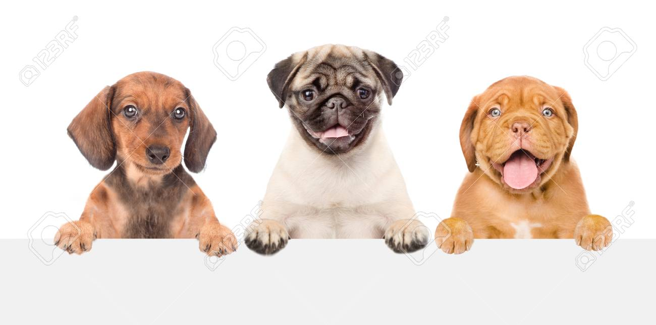 Group Of Puppies Above White Banner Isolated On White Background