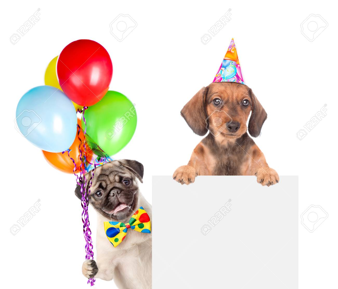 Dogs In Birthday Hats With Balloons Above White Banner Isolated On Background Stock