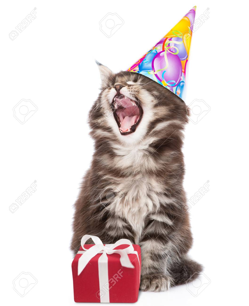 Cat In Birthday Hat With Open Mouth Sitting Near Gift Box Isolated On White Background