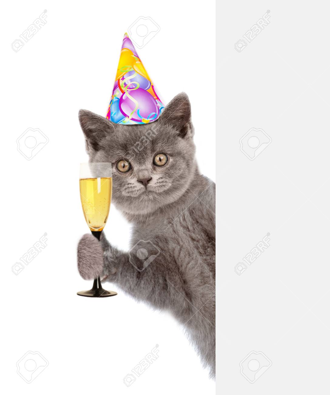 Cat In Birthday Hat Holding Glass Of Champagne Behind Empty White Banner Isolated On