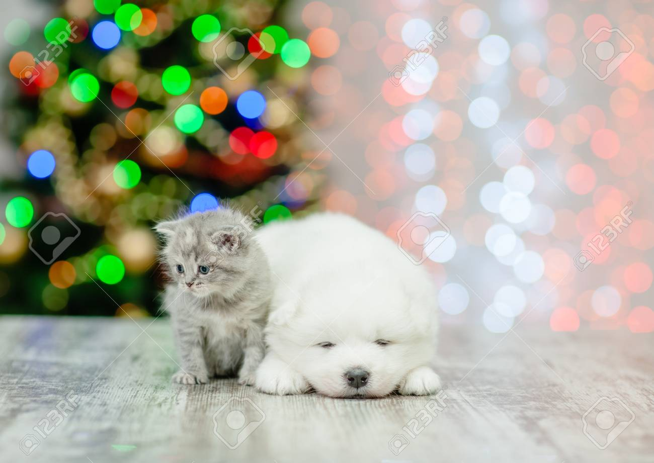 Baby Kitten And Samoyed Puppy With Christmas Tree On Background Stock Photo Picture And Royalty Free Image Image 115539186