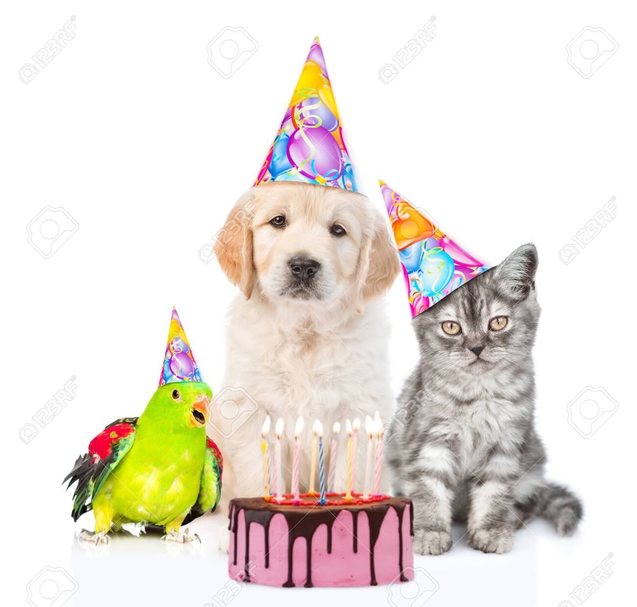 Awe Inspiring Cat Dog And Parrot In Birthday Hats Sitting With Birthday Cake Funny Birthday Cards Online Alyptdamsfinfo