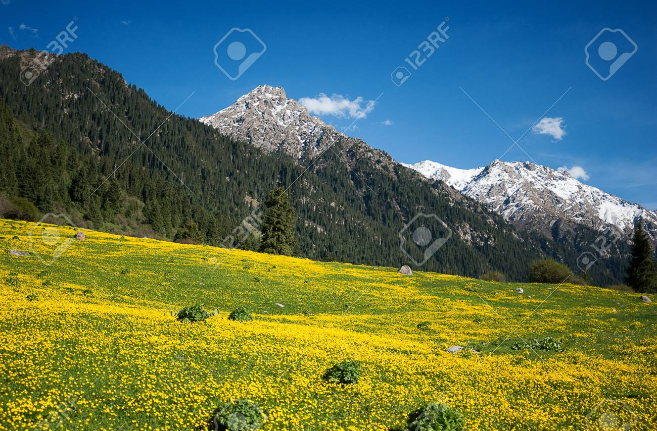 Beautiful yellow field of flowers in the mountains stock photo beautiful yellow field of flowers in the mountains stock photo 81241242 izmirmasajfo