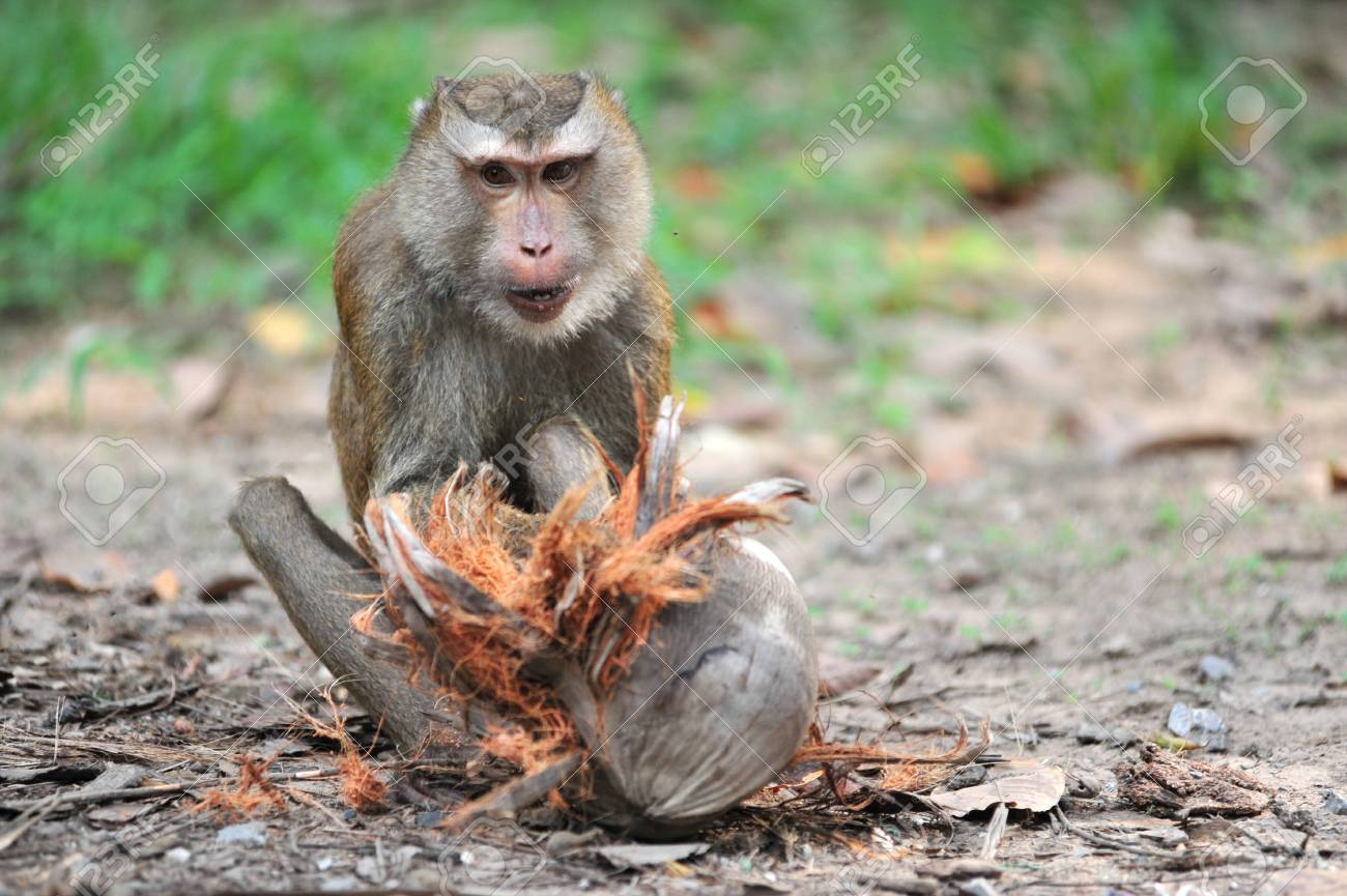 Monkey Stock Photo - 8757425